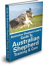 Ultimate Guide to Australian Shepherd Training & Care