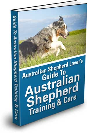 Australian Shepherd Lovers Guide To Australian Shepherd Training & Care