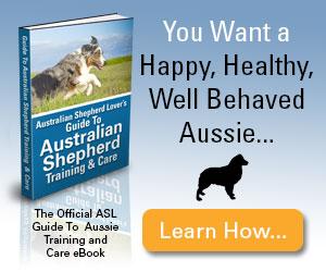 Australian Shepherd Lover's Guide To Australian Shepherd Training & Care