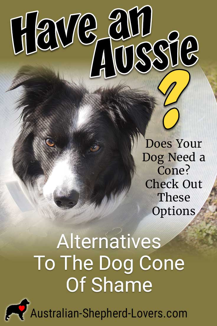 A dog cone can sometimes be a necessity but anyone who has ever had to use one on their dog knows that it is not the most pleasant, however, there are other much more comfortable options available. #australianshepherd #dogcone #dogconealternative #dogconeofshame #aussielovers