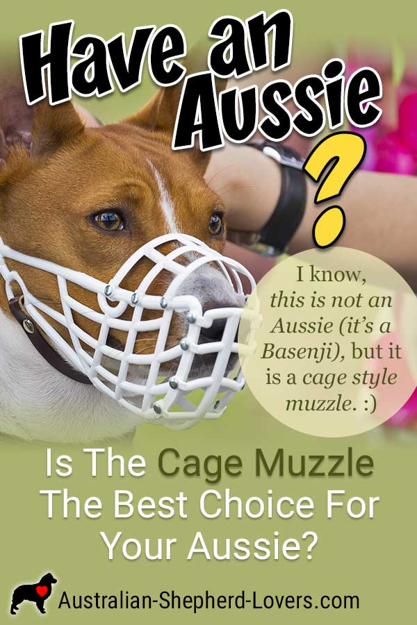 Using a cage dog muzzle can be a daunting experience as it may look cruel but there are some instances where a muzzle may be necessary for the safety of people, other animals, and your Australian Shepherd. #australianshepherd #dogmuzzle #dogtraining #aussielovers