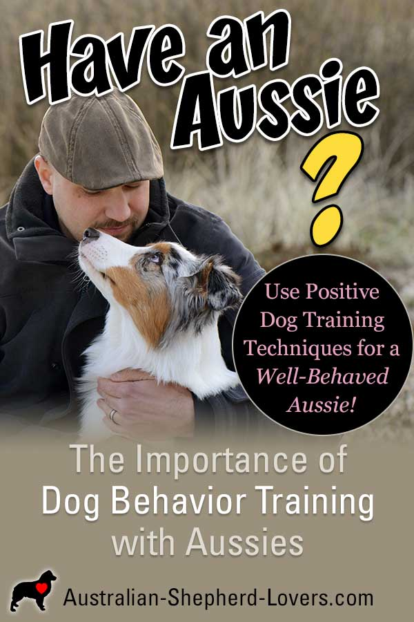 Looking for dog behavior training tips to help with barking, chewing, jumping up, digging, nipping, biting, or getting aggressive? There are steps you can take to help your Aussie stop these behaviors.  #australianshepherd #dogtraining #puppytraining #aussielovers