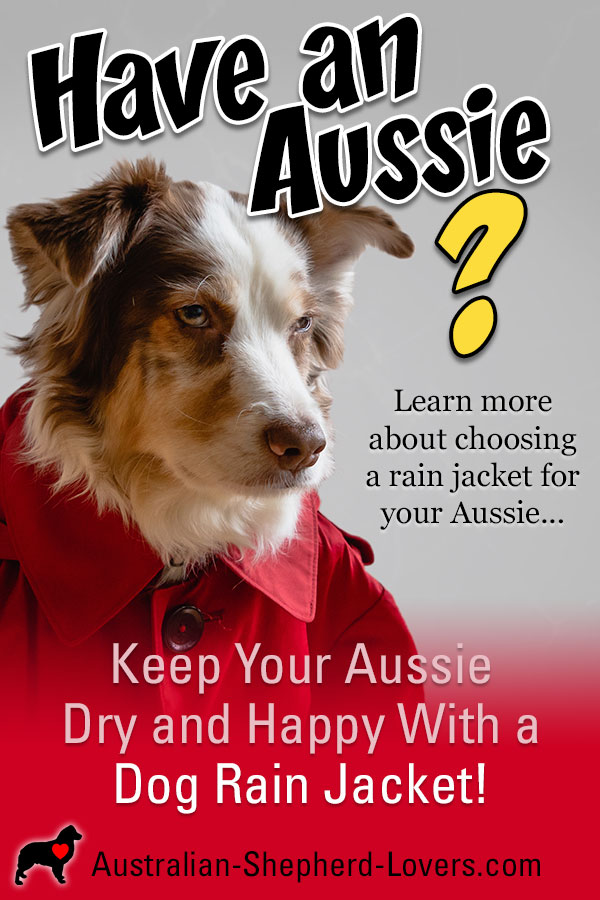 A dog rain jacket can really come in handy when the weather gets wet and miserable. Dogs still need to get out even in rain and snow. Why not keep your them dry and happy with a waterproof dog raincoat?  #australianshepherd #doggear #dograincoat #dograinjacket #aussielovers