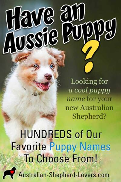 Our Favorite Puppy Names for Your Australian Shepherd. Looking for a cool puppy name for your Aussie? Need a boy or girl puppy name or one for an older dog? Hundreds of unique dog names to choose from.  #australianshepherd #puppynames #dognames #aussielovers