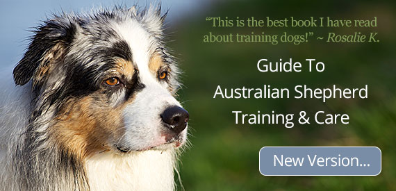 Guide To Australian Shepherd Training and Care