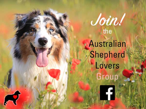 Join the Australian Shepherd Lovers Group on Facebook