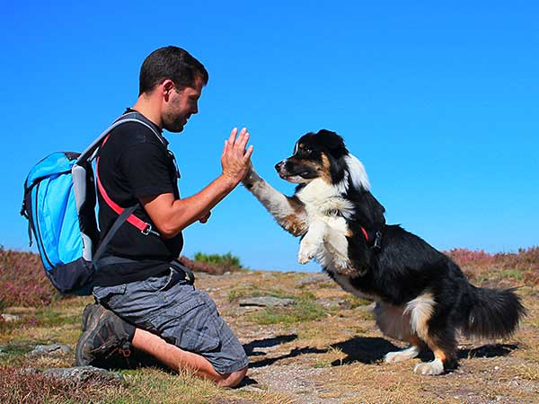 Man giving high-five to Australian Shepherd with dog backpack.