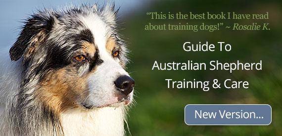 Guide To Australian Shepherd Training & Care