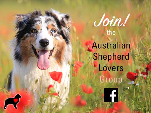 Join the Australian Shepherd Lovers Group on Facebook