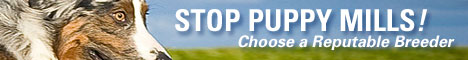 Australian-Shepherd-Lovers.com - Stop Puppy Mills - Choose a Reputable Breeder