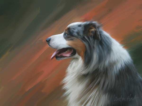 Share Your Australian Shepherd Art, Drawings, Paintings, Cartoons Forum - Digital Painting of Australian Shepherd, Athos.