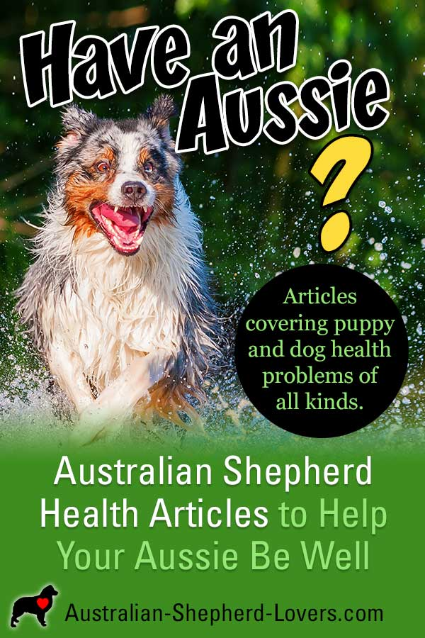 Australian Shepherd Health Care Tips. Articles covering puppy and dog health problems of all kinds including dog diseases and warning signs and symptoms for medical issues common in Aussies. #australianshepherd #doghealth #puppyhealth #aussielovers