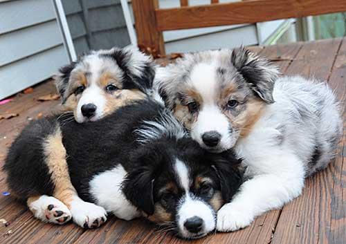 Affordable Dog Training