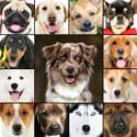 Grid of photos of different dog breeds.