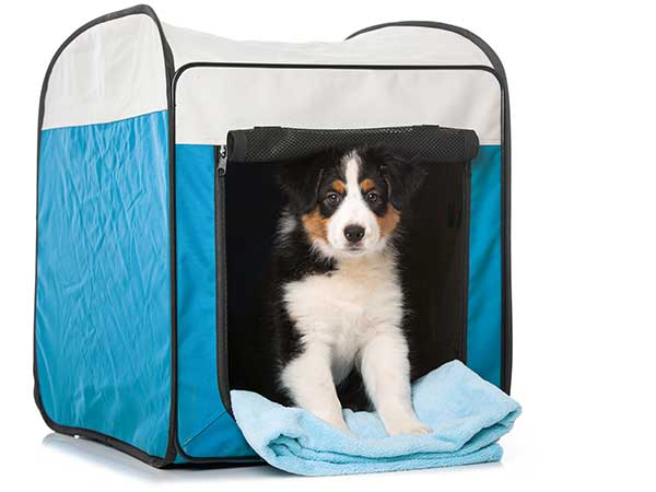 Australian Shepherd puppy in fabric crate.