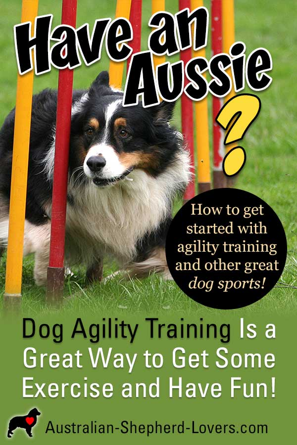 Dog Agility Training info and how to get started with your Australian Shepherd from dog agility courses, classes, and clubs to agility equipment. And dog sports like disc dog, flyball, and dock diving!  #australianshepherd #dogagility #dogagilitydiy #dogagilitytraining #dogagilityequipment #aussielovers