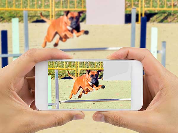 Person making dog agility video of their dog.