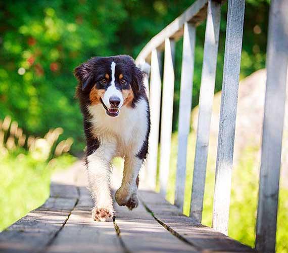 Dog Arthritis Medication