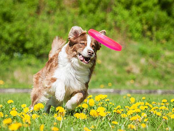 Dog Frisbee Lets Fun Take Flight