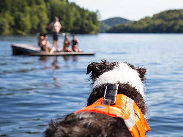 Australian Shepherd in life jacket watches people on raft on lake.