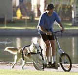 Urban Mushing - Dog Powered Scooter