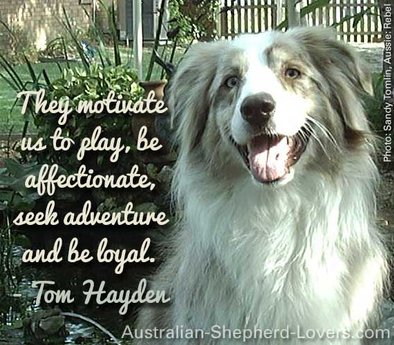 They motivate us to play, be affectionate, seek adventure and be loyal. ~ Tom Hayden