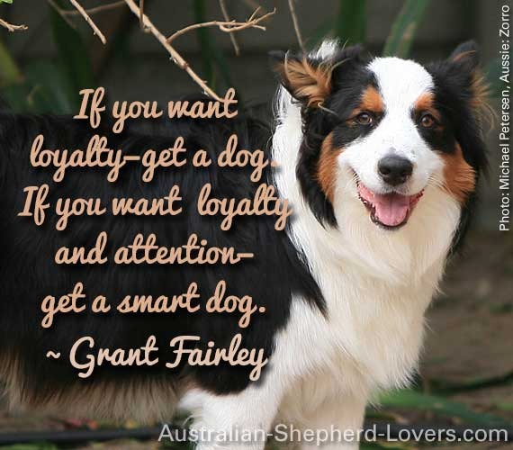 If you want loyalty—get a dog. If you want loyalty and attention—get a smart dog. ~ Grant Fairley