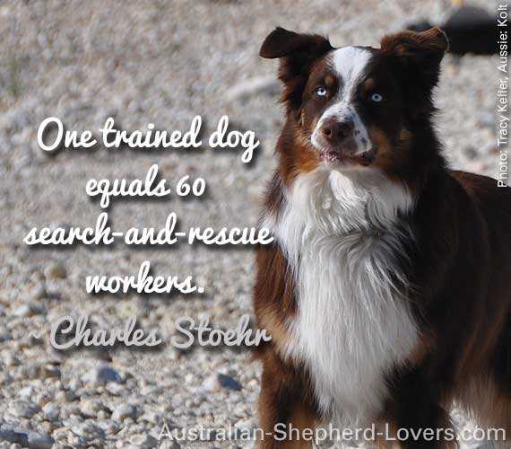 One trained dog equals 60 search-and-rescue workers. ~ Charles Stoehr