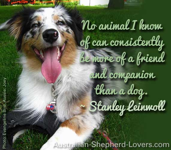 No animal I know of can consistently be more of a friend and companion than a dog. ~ Stanley Leinwoll