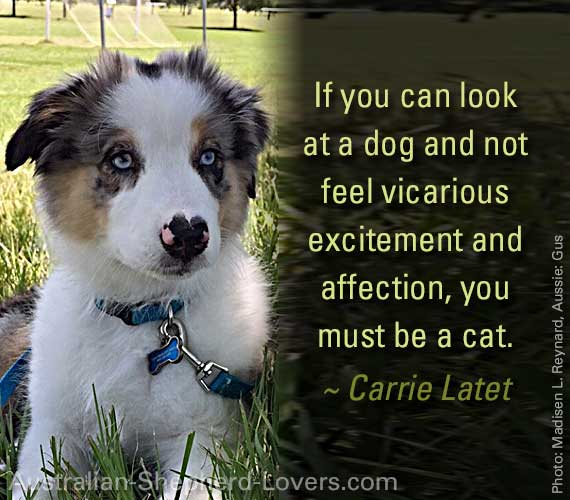 If you can look at a dog and not feel vicarious excitement and affection, you must be a cat. ~ Carrie Latet