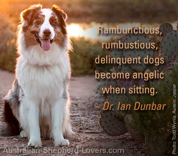 Rambunctious, rumbustious, delinquent dogs become angelic when sitting. ~ Dr. Ian Dunbar