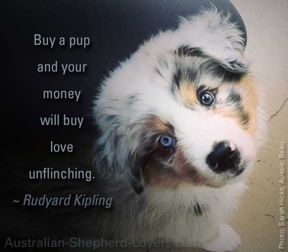 Buy a pup and your money will buy love unflinching. ~ Rudyard Kipling