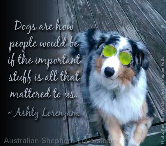 Dogs are how people would be if the important stuff is all that mattered to us. ~ Ashly Lorenzana
