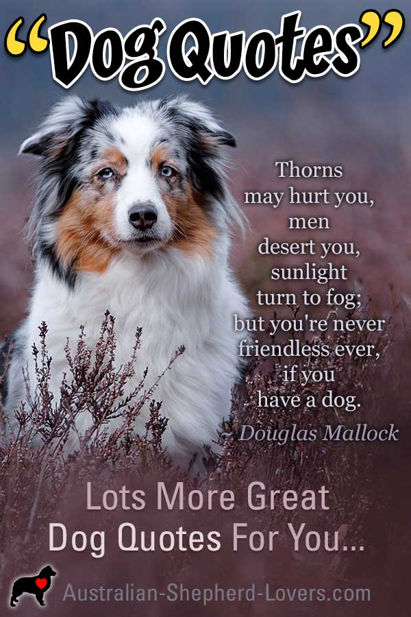 I Love Dog Quotes. Dogs are inspirational and show us loyalty and love whether we are happy or sad. They are funny and make us laugh when we need it. I hope these quotes about dogs brighten your day.  #australianshepherd #dogquotes #dogquotations #aussielovers