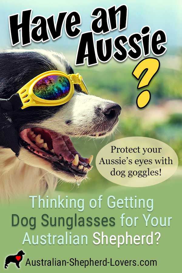 Dog sunglasses or dog goggles help to provide protection for your dog's eyes from irritants, flying debris, and sun damage. They add a layer of safety to prevent injury and costly visits to the vet. #australianshepherd #aussielovers #dogsunglasses #doggoggles