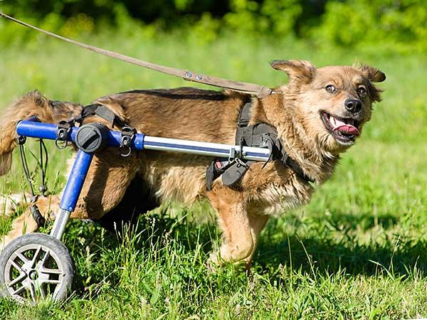 Dog wheel chair