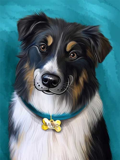 Australian Shepherd Digital Caricature Portrait