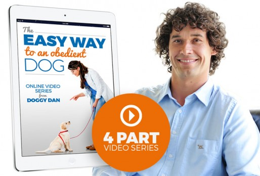 The Easy Way To An Obedient Dog 4 Part Video Series