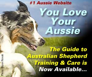 Australian Shepherd Lover's Guide To Australian Shepherd Training & Care