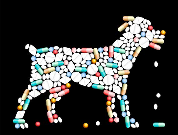 Ivermectin for Dogs, Trifexis and MDR1 Gene Mutation