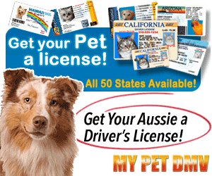 Get Your Pet A License - My Pet DMV