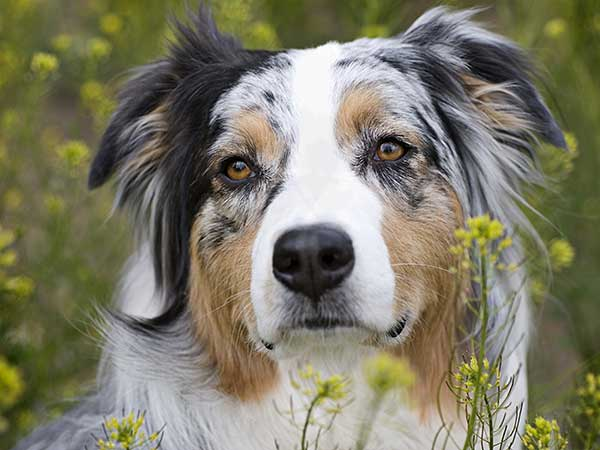 Natural Dog Remedies