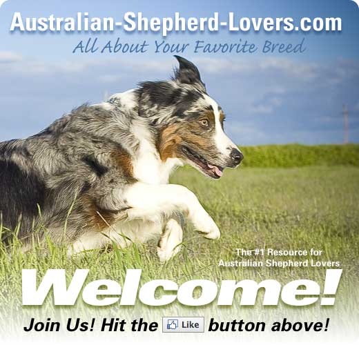 Australian Shepherd Lovers
