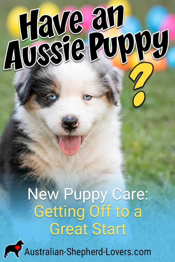 New Puppy Care A Great Start With Your Australian Shepherd Puppy