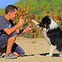 Man training Australian Shepherd.