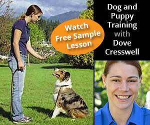 Dog and Puppy Training with Dove Cresswell