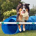 Starting Agility Training