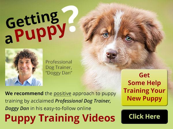 Getting a Puppy?