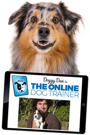 Doggy Dan, The Online Dog Trainer