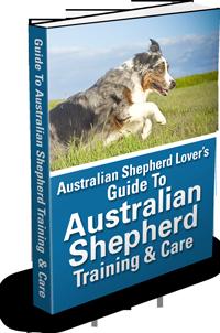 Guide To Australian Shepherd Training & Care Ebook
